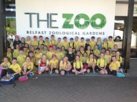 P4 trip to Belfast Zoo